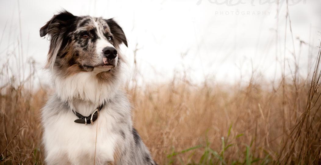 Dog_Photography_075
