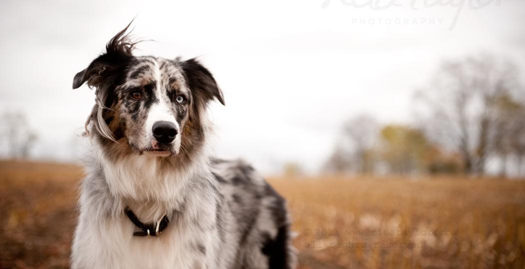 Dog_Photography_077