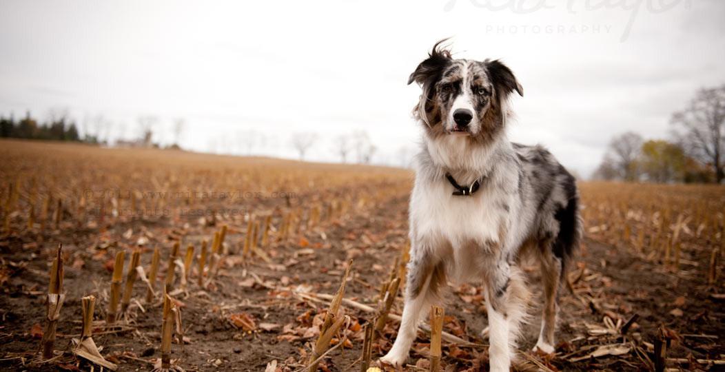 Dog_Photography_078
